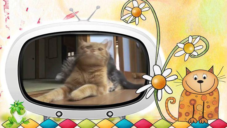 Канал Creati Video (Креати Видео) и сайт http://lena-film.ru/ представляют новый смешной и забавный ролик про котов…