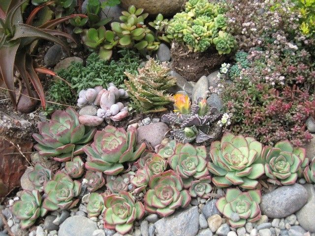 10 best images about Rock garden on Pinterest Gardens