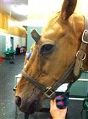 Retired show horse becomes unwitting real-life unicorn -- and survives