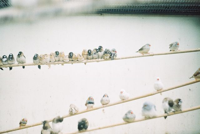 i love you, chubby birds on a wire // mtaylorz11, via FlickrPhotos, Inspiration, Photographers Heart, Feathers, Birds, Photography, Sea Glasses, Animal, The Wire