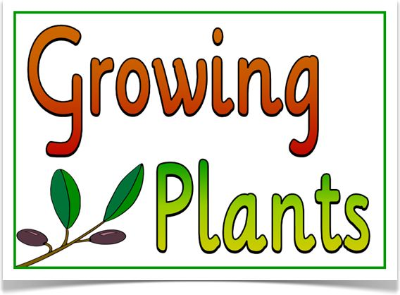 "Growing Plants - Treetop Displays - A set of 9 A4 posters that explain what plants need in order to grow. Includes: title poster, soil, pot, water, sunlight, nutrients, air and food (vegetable) and (fruit). A must-have display for the science topic ""Growing Plants!"" Visit our website for more information and for other printable resources by clicking on the provided links. Designed by teachers for Early Years (EYFS), Key Stage 1 (KS1) and Key Stage 2 (KS2)."