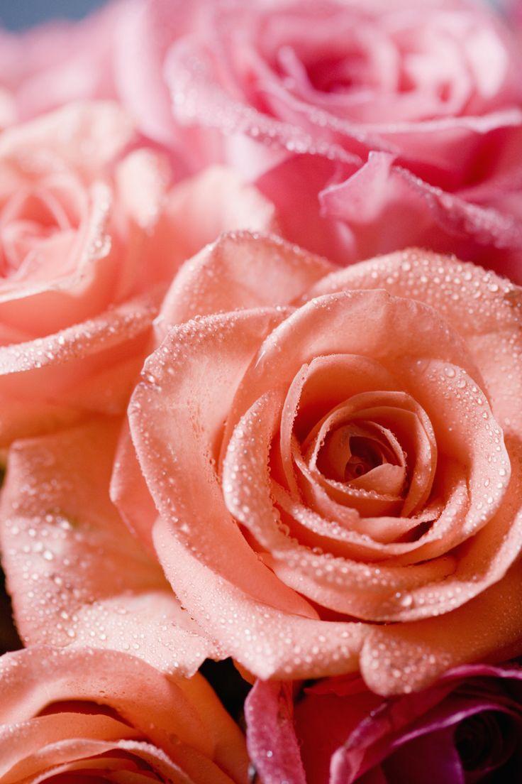 7 best Marc\'s Fresh Cut Flowers images on Pinterest | Cut flowers ...