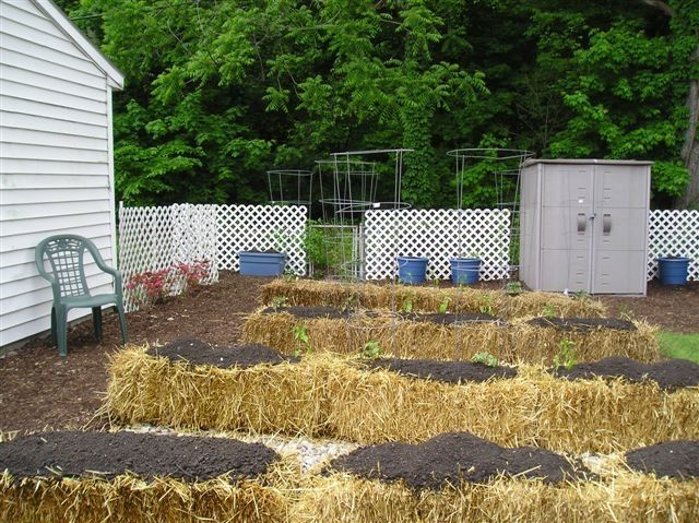 From beginning to end - one gardener's straw bale garden experiment. Lots of photos.