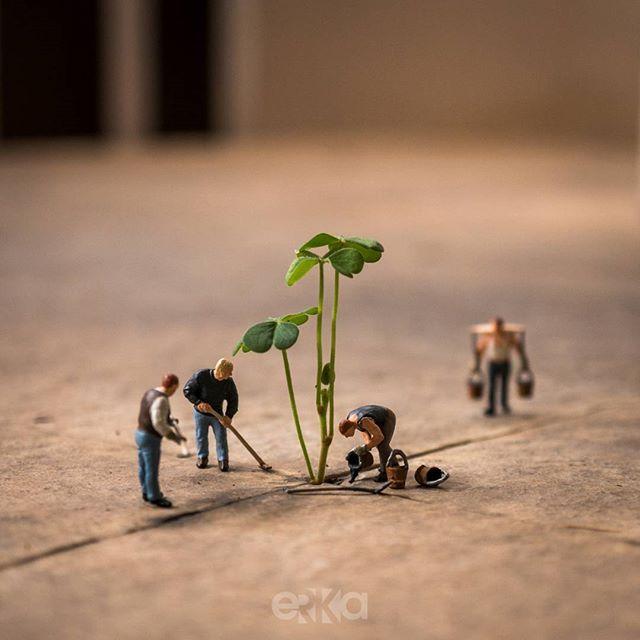 Menanam di Hutan Beton . (Urban Farming)