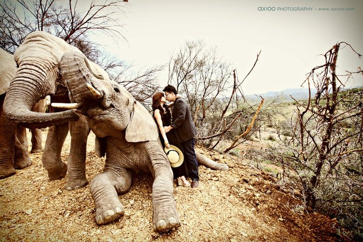 I want my picture taken with an elephant