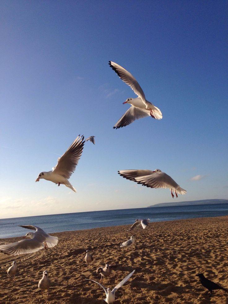Bournemouth Beach - O que saber antes de ir - TripAdvisor