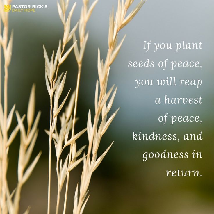 """Those who are peacemakers will plant seeds of peace and reap a harvest of goodness."" James 3:18 TLB #DailyHope"