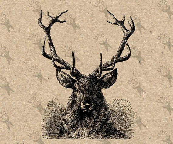 Antique image Deer Antlers Horns Instant Download by UnoPrint