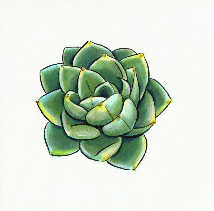 Image Result For How To Draw Succulents Step By Step