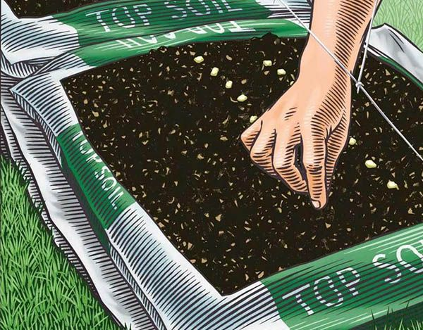 Quick And Easy Bag Gardening Vegetable Garden Lawn 400 x 300
