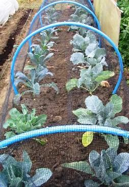 ~How to deal with vegetable garden pests~ A thorough list of proven natural pest control remedies.