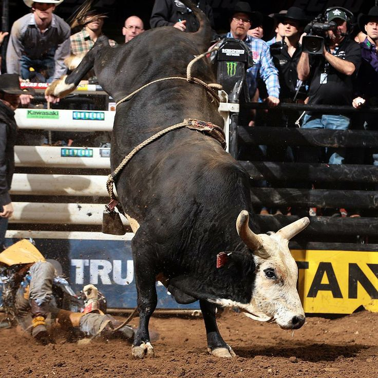 520 Best Bull Riding Images On Pinterest Rodeo Rodeo Cowboys And Rodeo Life