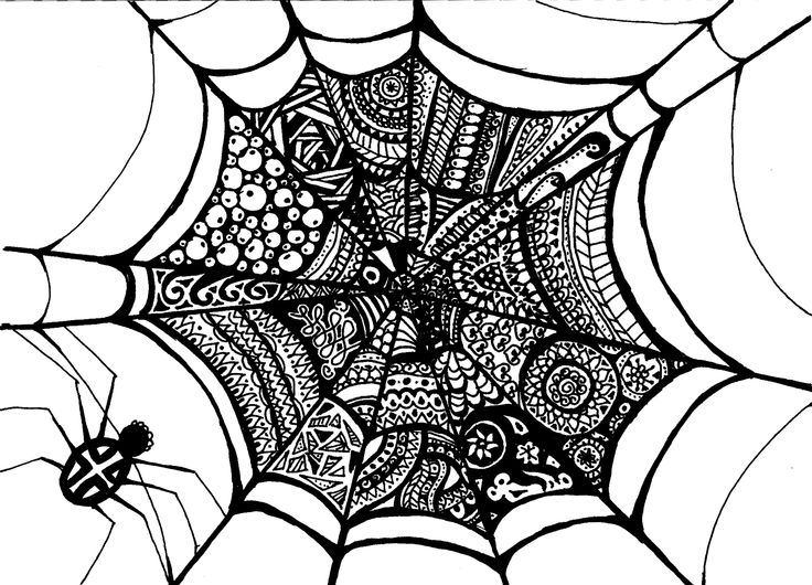 self-drawn web with a spider
