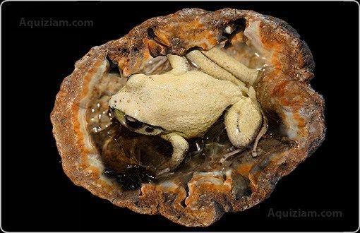 1.unexplained-phenomena-frog