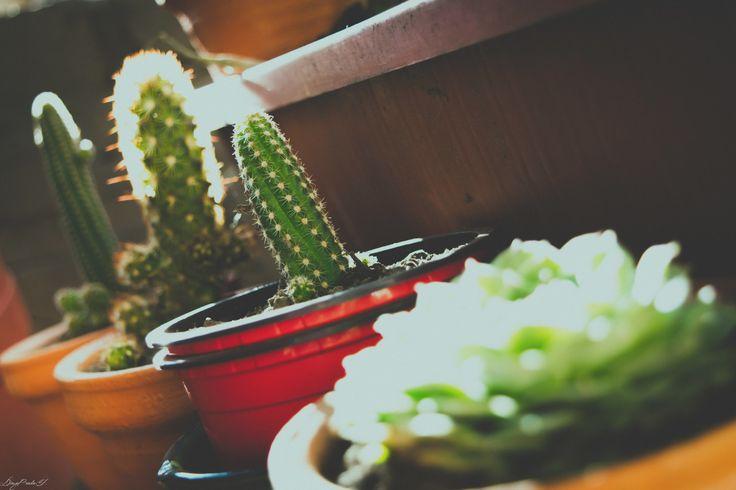 Cactus in your garden│Momentos Fotografía │Instagram │@lachicamisteriosa29