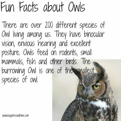 Best 20+ Facts About Owls ideas on Pinterest   Owl facts, Owl ...