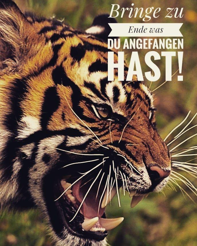 Einfach Und Wahr At Tigerzitate Tigerzitatefitness