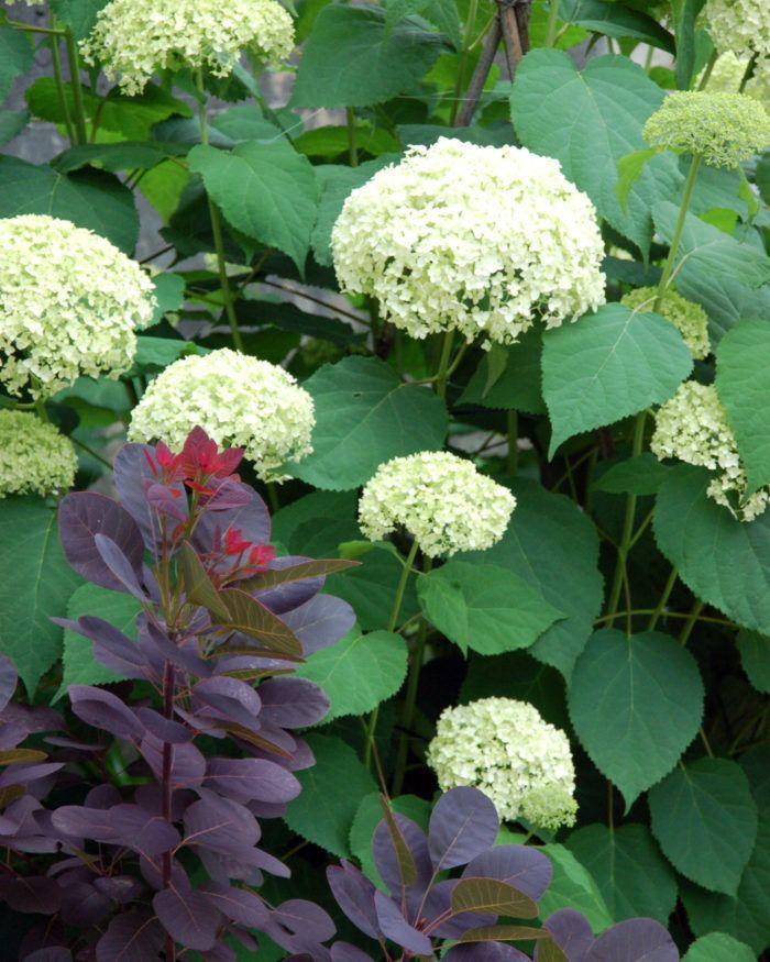 花 おしゃれまとめの人気アイデア Pinterest Forest2000 鉢植え 植物栽培 アジサイ