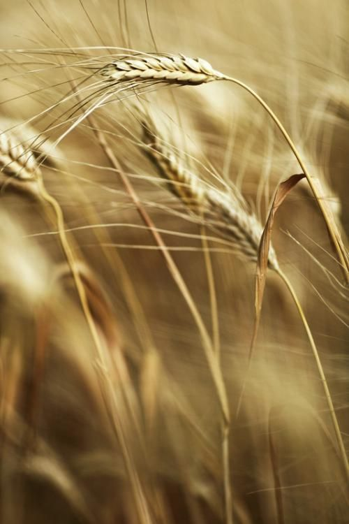 Counting the omer from #Passover to #Shavuot