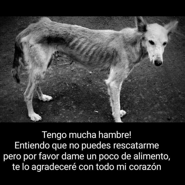 No podemos rescatarlos a todos pero si alimentar algunos. Cuando alimentas un perro de la calle enseñas con el ejemplo, puedes estar seguro de que de las personas que vean tu acto una lo repetirá. (@CatDogSV)   Twitter
