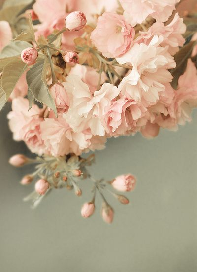 pale pink and pale greenPalepink, Cherries Blossoms, Pink Flower, Blushes Pink, Soft Colors, Soft Pink, Beautiful, Pale Pink, Pink Rose