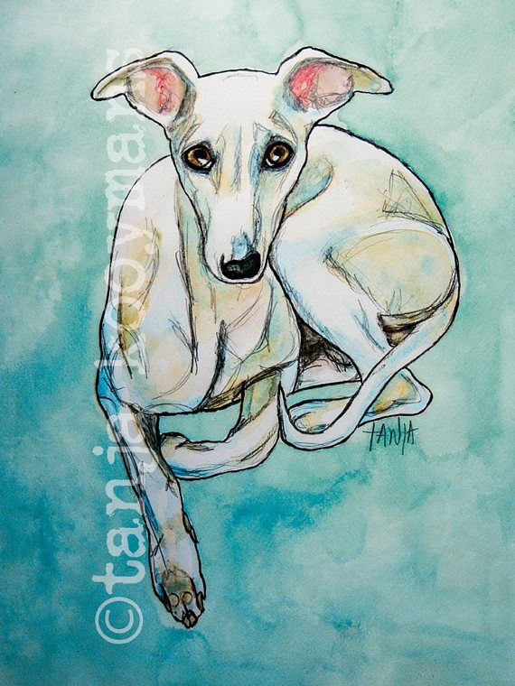 Italiaanse windhond iggy liggend iltaliaantje  italian greyhound by Tanja Kooymans Art