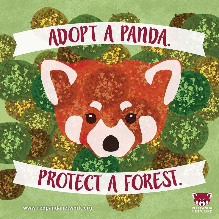 Extrêmement 14 best Adopt a Red Panda! images on Pinterest | Red pandas  UL54