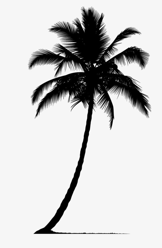 Palm Tree Silhouette Tree Clipart Palm Tree Plant Silhouette Png Transparent Clipart Image And Psd File For Free Download Tree Silhouette Tattoo Palm Tattoos Palm Tree Silhouette