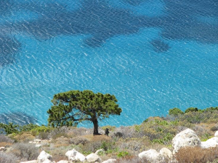 Lonely tree.. #Donousa #greece #islands