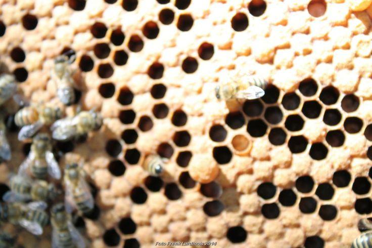Honingkamers gevuld