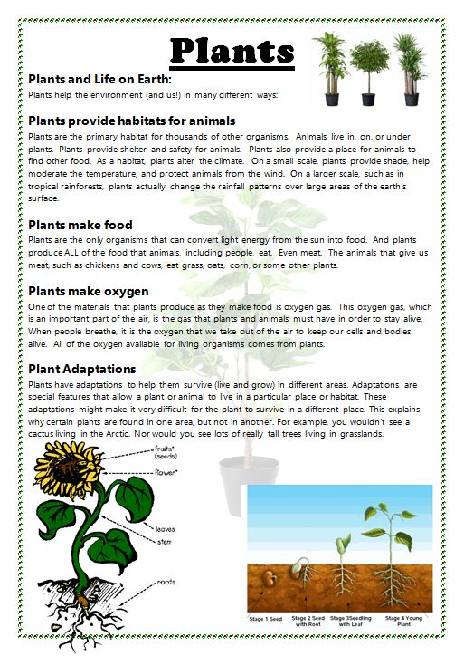 Sheet On Relevant Information On Plants  With Labelled