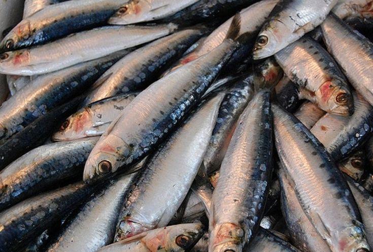 Todo los beneficios nutritivos y saludables del pescado azul
