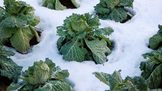 December garden checklist: Here's what you need to do to get your beds ready for winter. #garden #winter