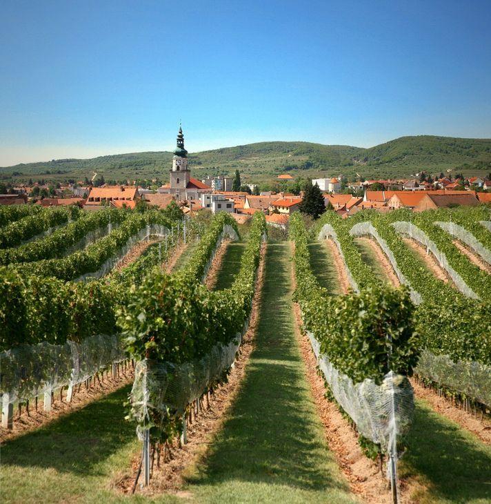 Little Carpathian Wine Route - Slovakia.travel