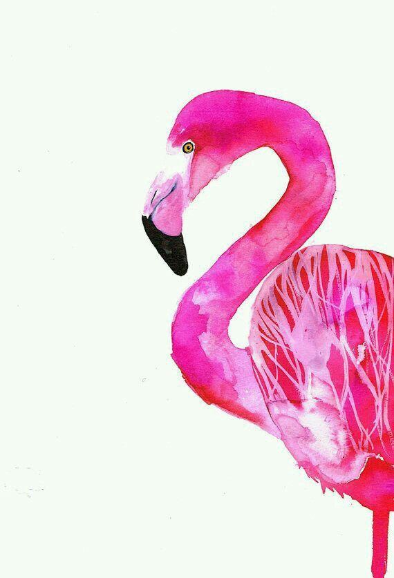 Imagenes de flamencoa