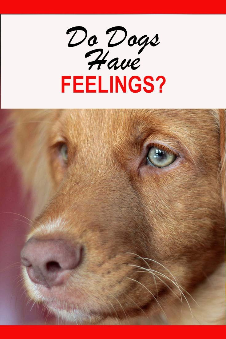 what emotions do dogs feel