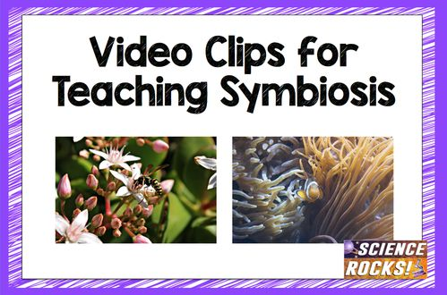 Great video clips for your symbiosis unit. Engaging videos showing mutalism, commensalism, and parasitism