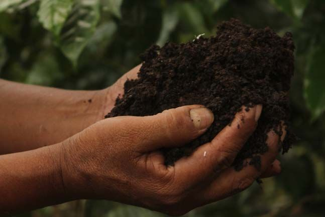Las Marias 93 in El Salvador, Coop Coffees producer partner, uses intensive organic practices, including worm-composting and the propagation of micro-organisms for better nutrient absorption and diversified micro-biological life in the soil.