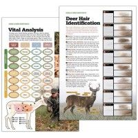 Deer & Deer Hunting's Shot Placement Poster