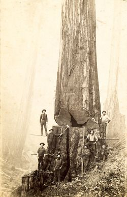 Wood Is Good! Second generation immigrant, John Robert Wilson was a logger in the deep south.