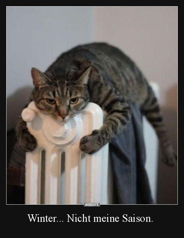 Winter... Nicht meine Saison. | Lustige Bilder, Sprüche, Witze, echt lustig