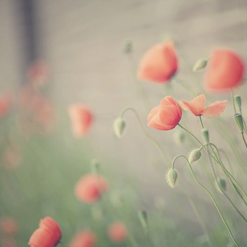 Soft floral .