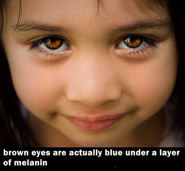 11 best Brown eyes facts images on Pinterest