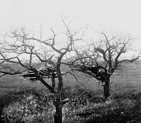Cheyenne Indians: Cheyenne Tree Graves