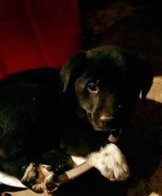 Great Pyrenees dog for Adoption in White River Junction, VT. ADN-415647 on PuppyFinder.com Gender: Female. Age: Baby