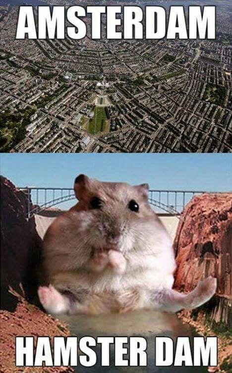 Cute Hamster Memes