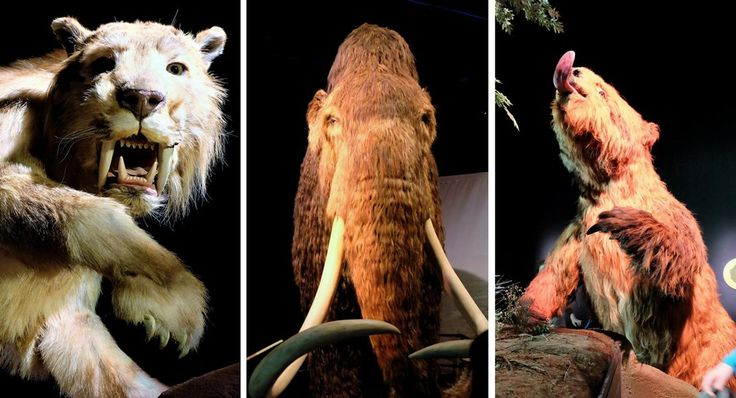 """Schon einmal einem lebensgroßem Mammut in die Augen gesehen? Oder einem Faultier? Feuer mit Steinen gemacht? Eine Eisprobe in der Antarktis genommen? Nicht? Na, dann auf... ...auf ins Odysseum. Freitag, 01.06.2017, öffnet dort die niegel-nagel-neue Sonderausstellung """"ICE AGE: Dem Mammut auf der Spur"""".  #Odysseum #Köln #Ausstellung #Ice #Age #Steinzeit #Mammut #Säbelzahntiger #Sid"""