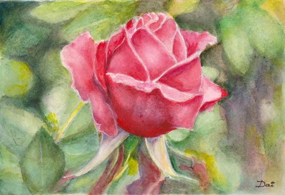 A red rose for my Valentine.  Watercolour painting by Dai Wynn on Arches paper.  A5 size.