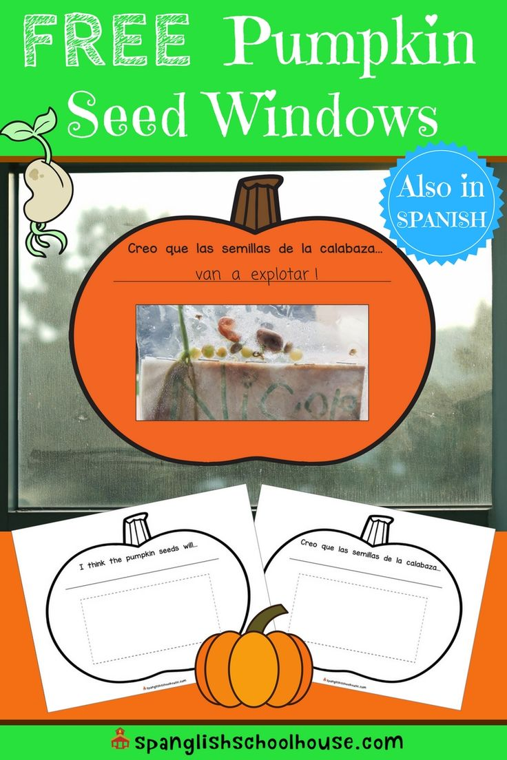 Before you toss the goop inside your pumpkin...try this!  These FREE pumpkin seed windows are the perfect simple fall science activity.  Grab yours now in English or Spanish.