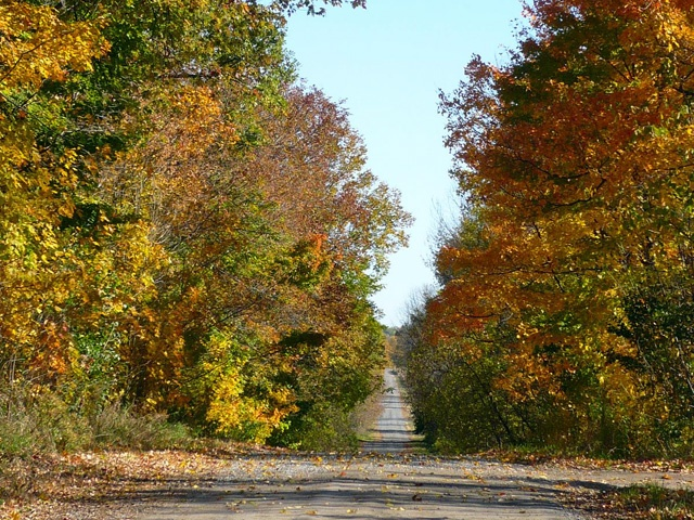 The country lane in the fall; the colour palette so perfect for a wedding.
